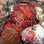 Invasion of the Lionfish at www.LionfishHunters.org