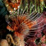 Lionfish / Invasive Species Location Reporting at www.LionfishHunters.org