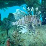 Statistics on Lionfish Sightings at www.LionfishHunters.org