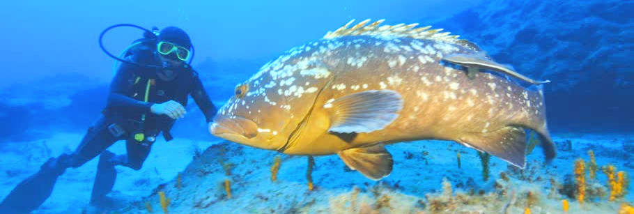 diver and grouper